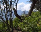 Oblast Yungas – plantáž koky