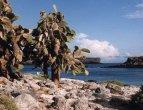 Galapágy – stromové opuncie na ostrově Plaza