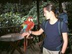 Domácí papoušek ara (Amazonie)