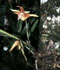 Květy džungle – orchidej